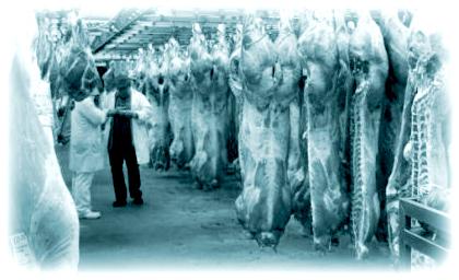 Оборудование для переработки и хранения мяса